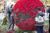 flower festival22