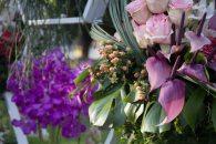 flower festival24