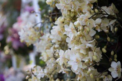 flower festival25