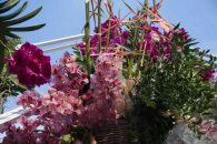 flower festival26